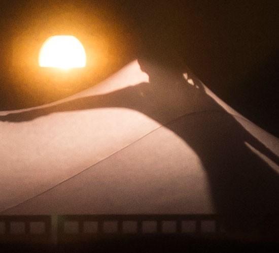 bamboo_thumbnail